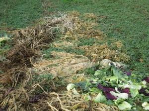 Sheet compost